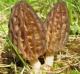 Регистрация на сайте.  Растения и цветы.  Не съедобные грибы.  Орехи.