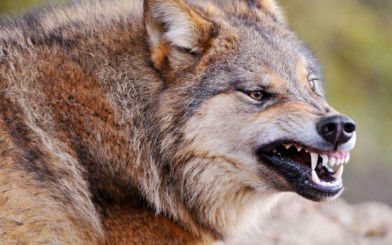 Свора бродячих собак насмерть загрызла женщину вМордовии